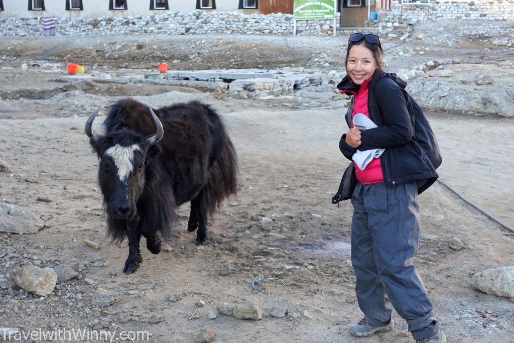 yak 犛牛