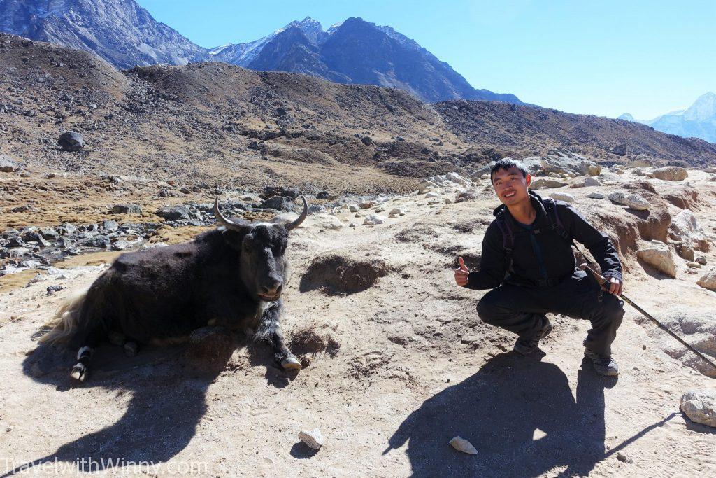 EBC 聖母峰 himalayas 喜馬拉雅山 yak 犛牛