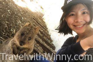 短尾矮袋鼠 quokka selfie 自拍