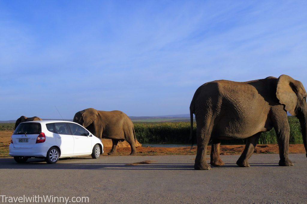 addo elephant south africa 南非 大象 車子 car