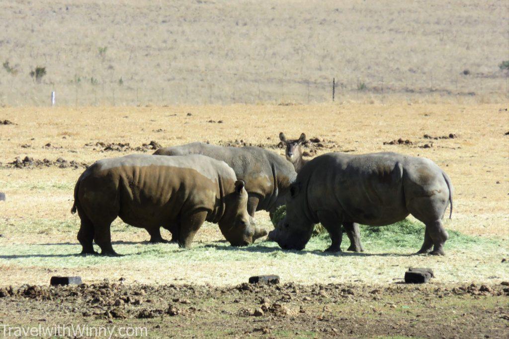 rhino 犀牛