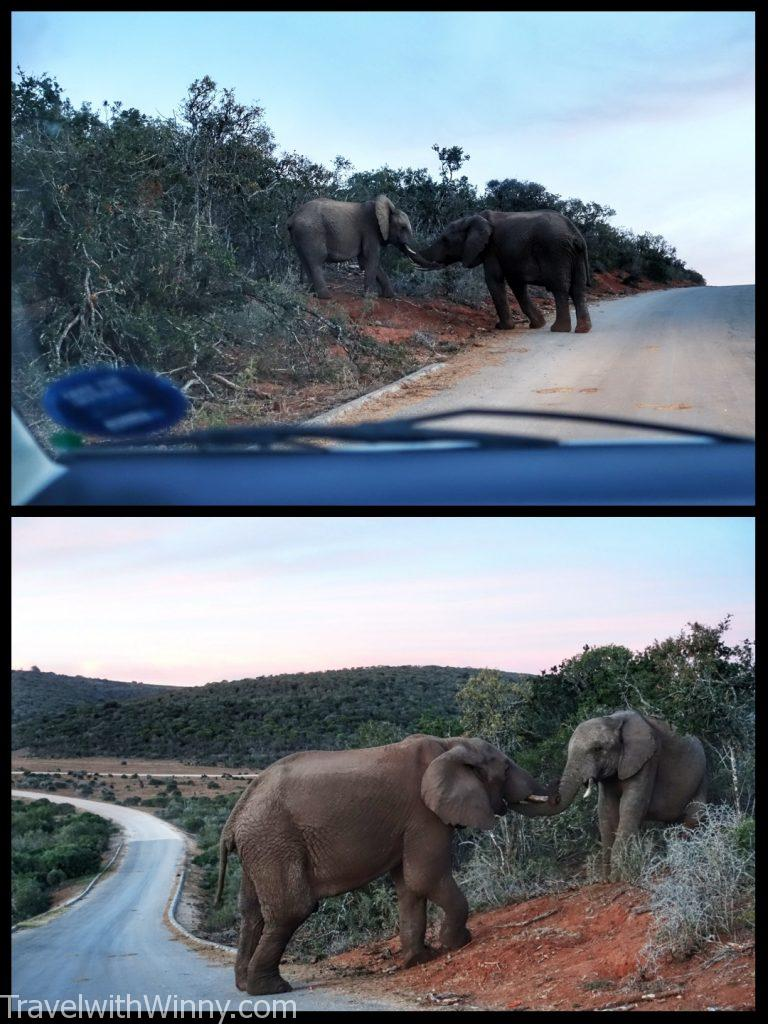 南非 south africa Addo Elephant Park 阿多大象國家公園