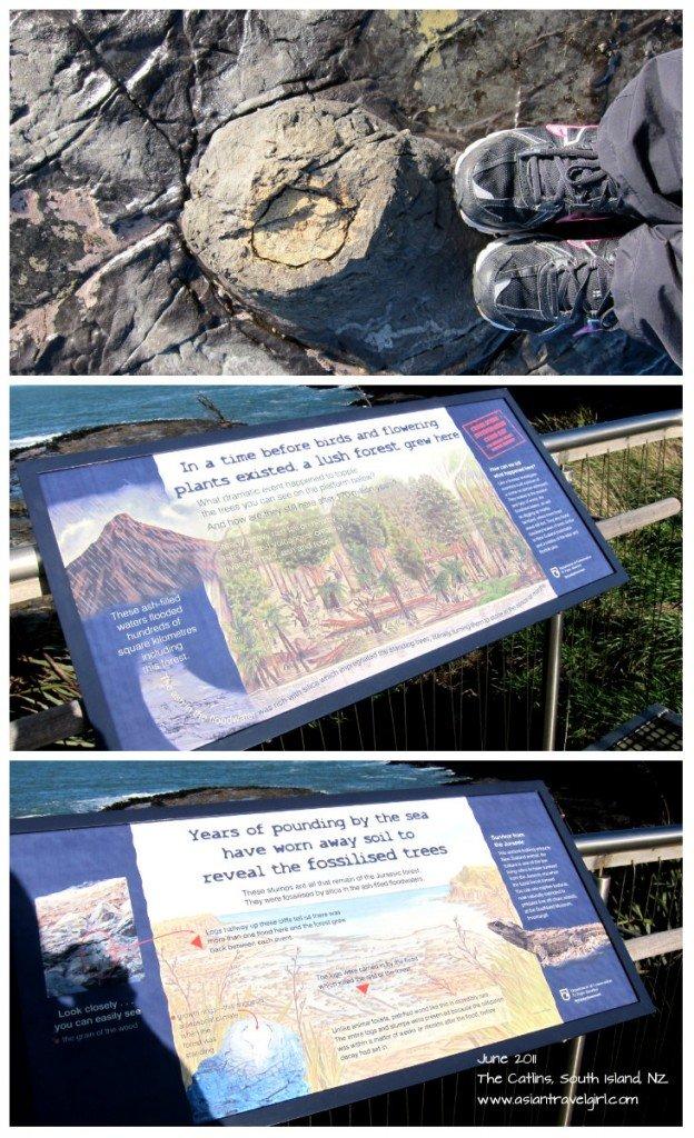 化石 森林