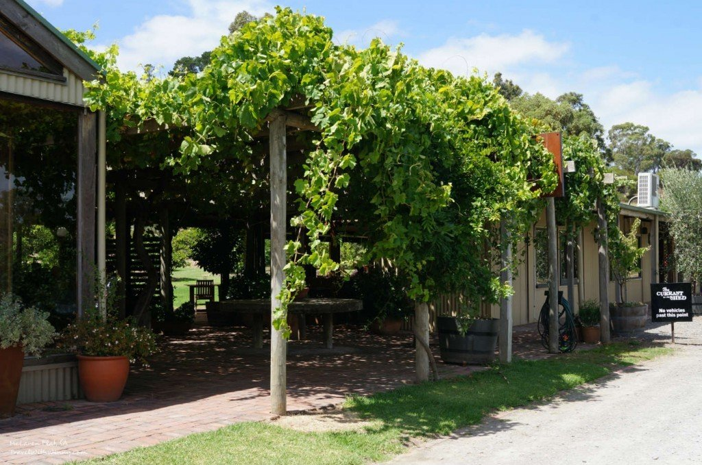 The Currant Shed Mclaren Vale Sa Travel With Winny