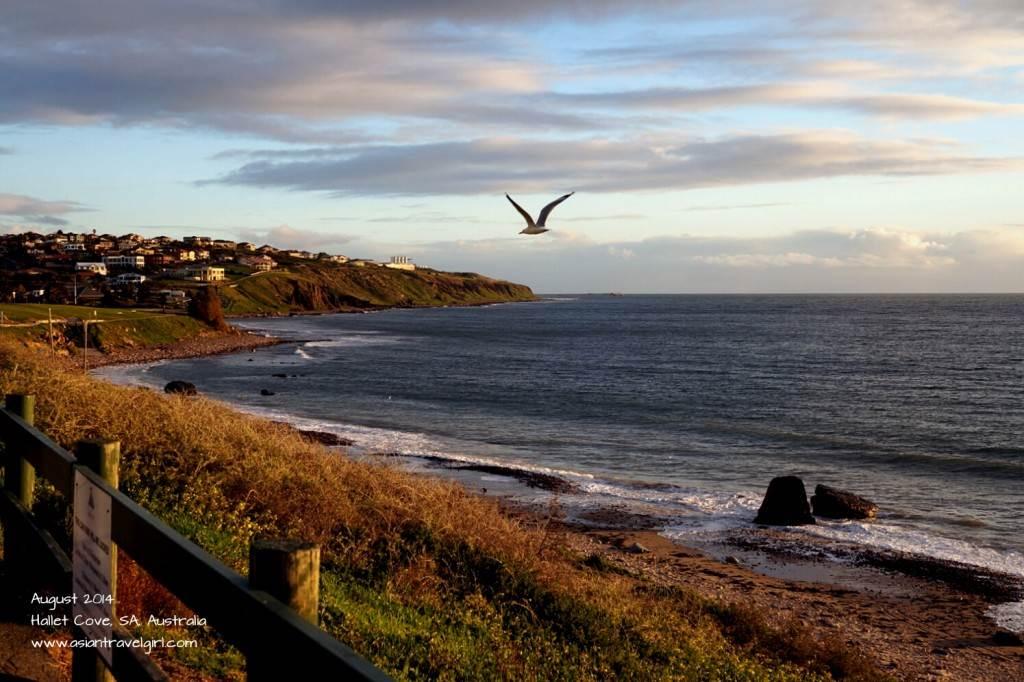 夕陽與海鷗