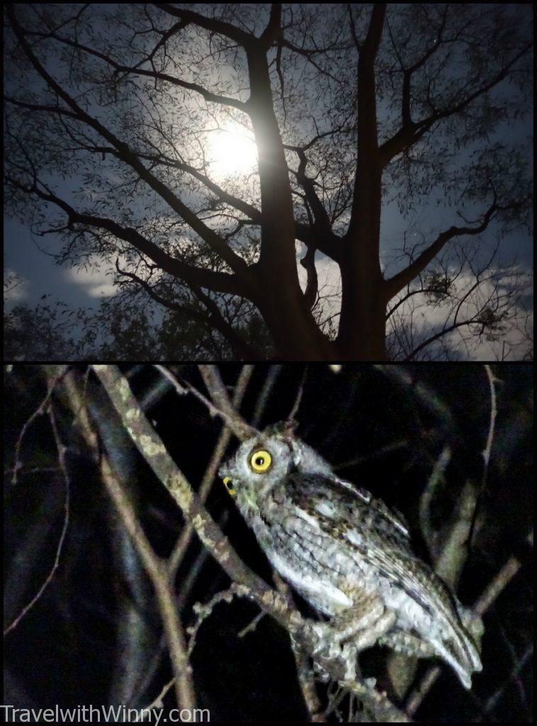 full moon 滿月 貓頭鷹 owl